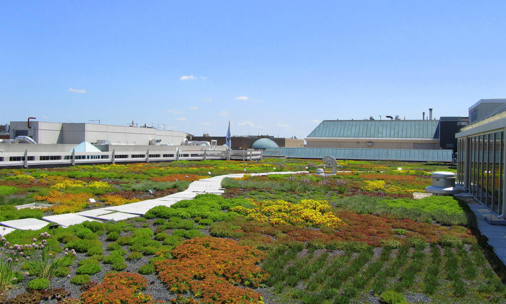 WWF HQ green roof Bright Bushes Close Up