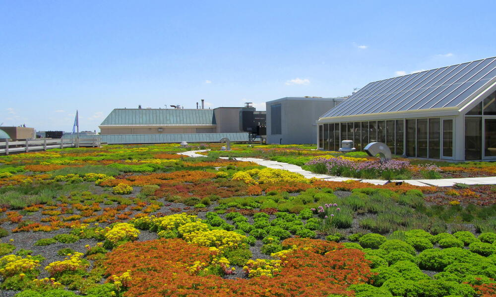 Green HQ green roof