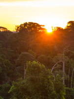 Conserving Forests to  Combat Climate Change Brochure