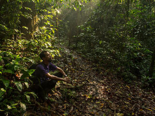 A man sits on the forest floor looking up while the sun shines down through the leaves