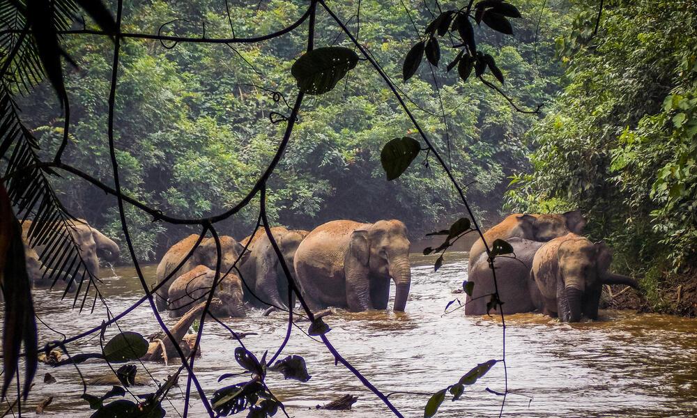 herd of elephants in 30 Hills