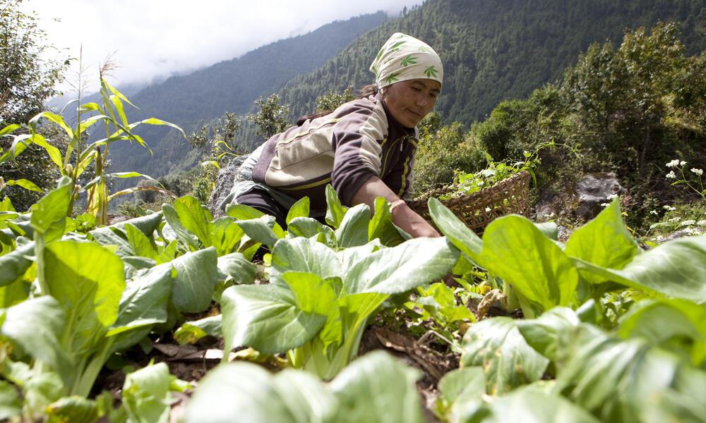 watering garden in asia high mountains