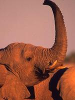 A Ban on Commercial Elephant Ivory Trade in China: A Feasibility Study Briefing Brochure