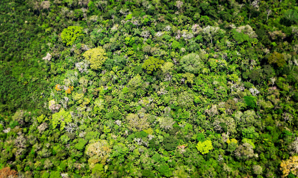 aerial view of the amazon rainforest
