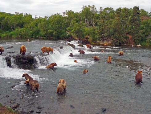 Alaska's Conservation Frontier