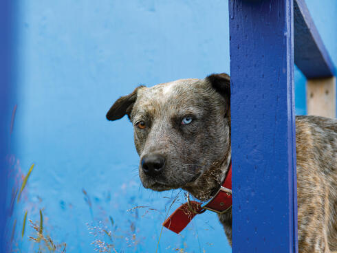 Dog peeking