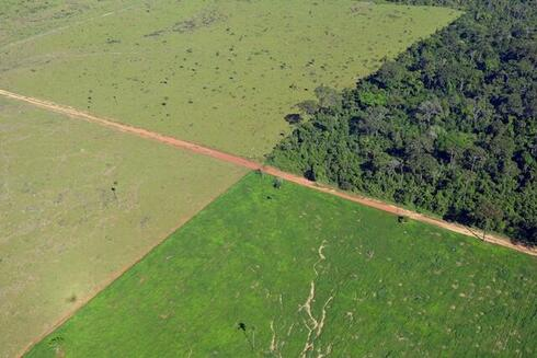 Aerial view of deforestation in Amazon
