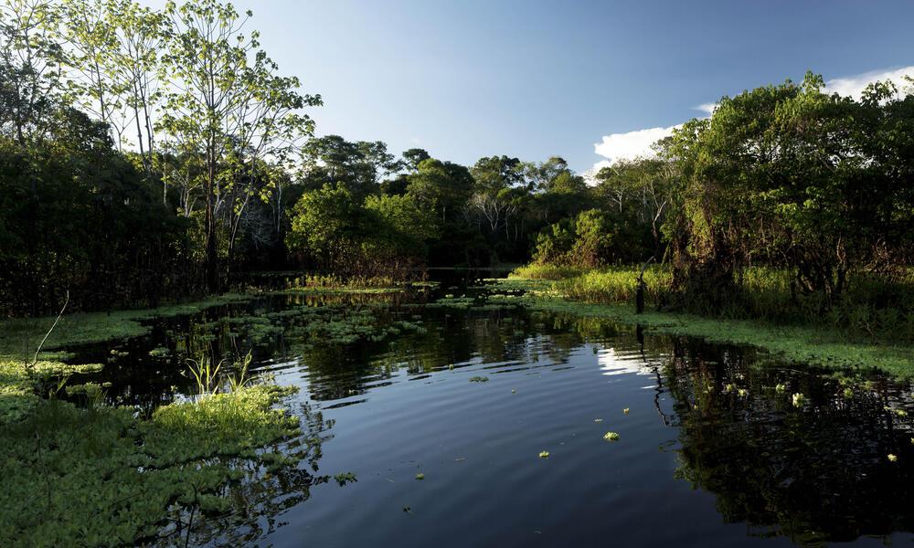 Body of water in the Pacaya Samira Reserve, Peru, Amazon
