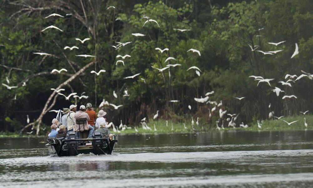 Travellers bird watch in the Peruvian Amazon