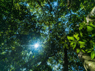 view from below looking up into the treetops with sunlight bursting through the canopy