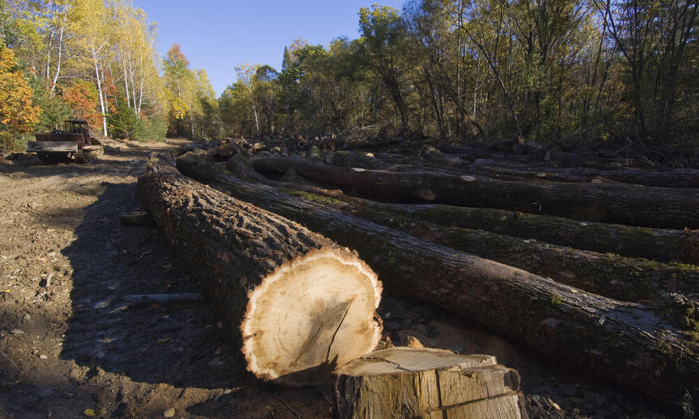 Illegal logging operation, Russian Far East