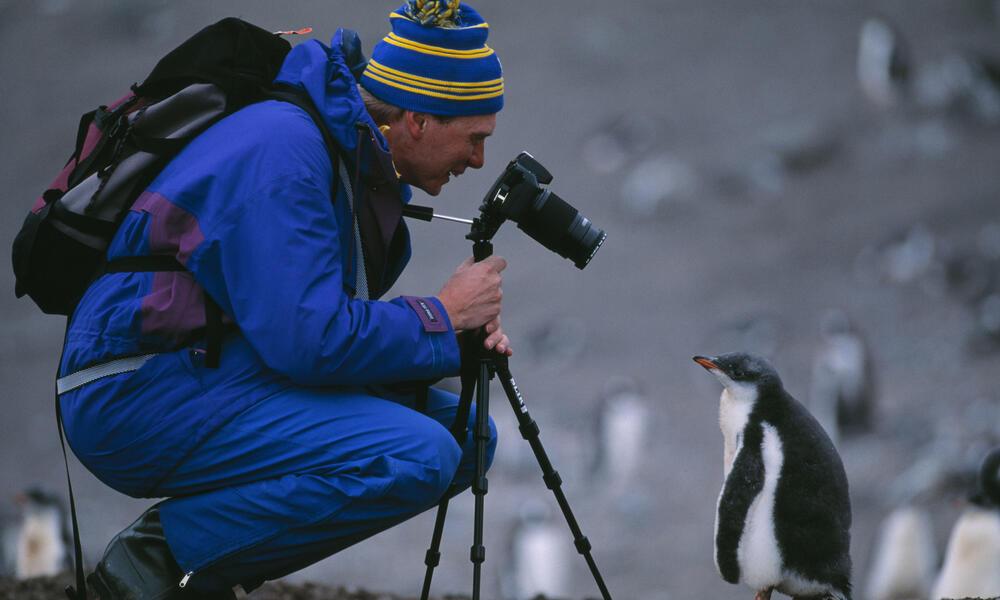 Gento Penguin and Ecotourist