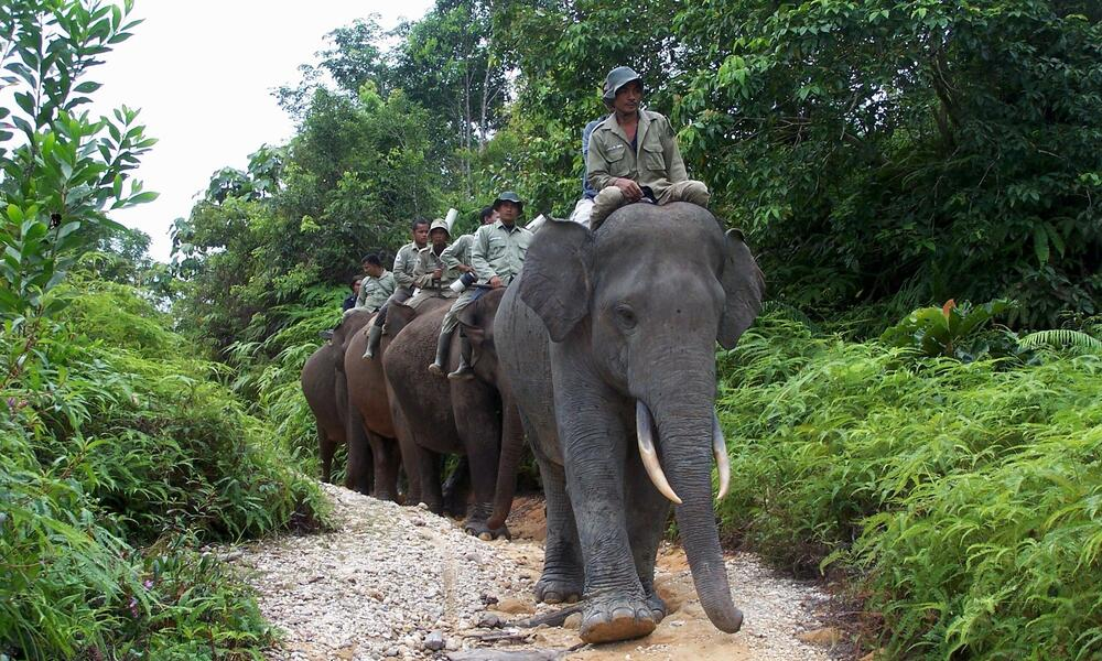 Asian Elephant Reducing Human Elephant Conflict