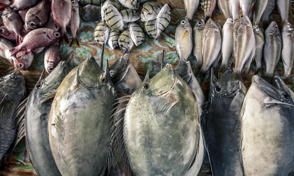Assorted Fish at Market