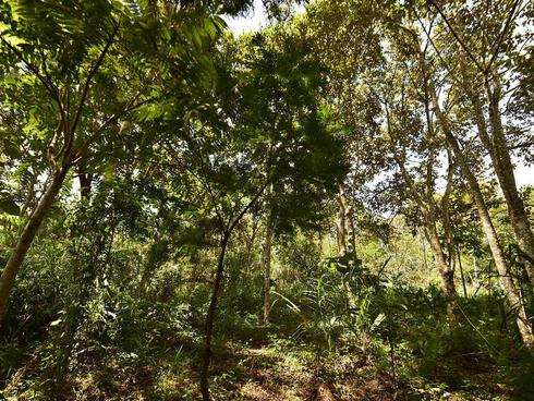Tree canopy in Atlantic Forest, Brazil