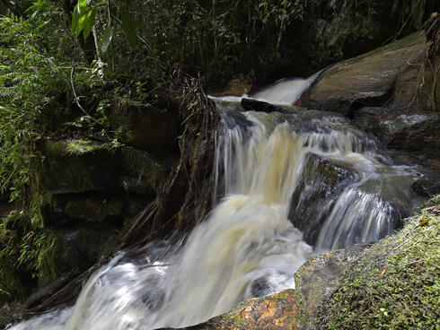 A small waterfall in the Atlantic Forest surrounded by plants.