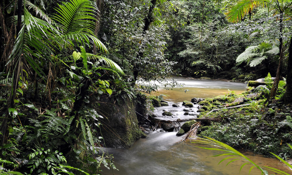 Stream of water surrounded by forest at Figueira trail, Carlos Botelho State Park, São Paulo, Brazil.