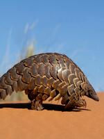 Halting the illegal trade of CITES species from World Heritage Sites Brochure