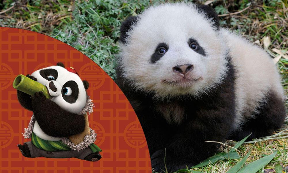 Bao and Baby Panda