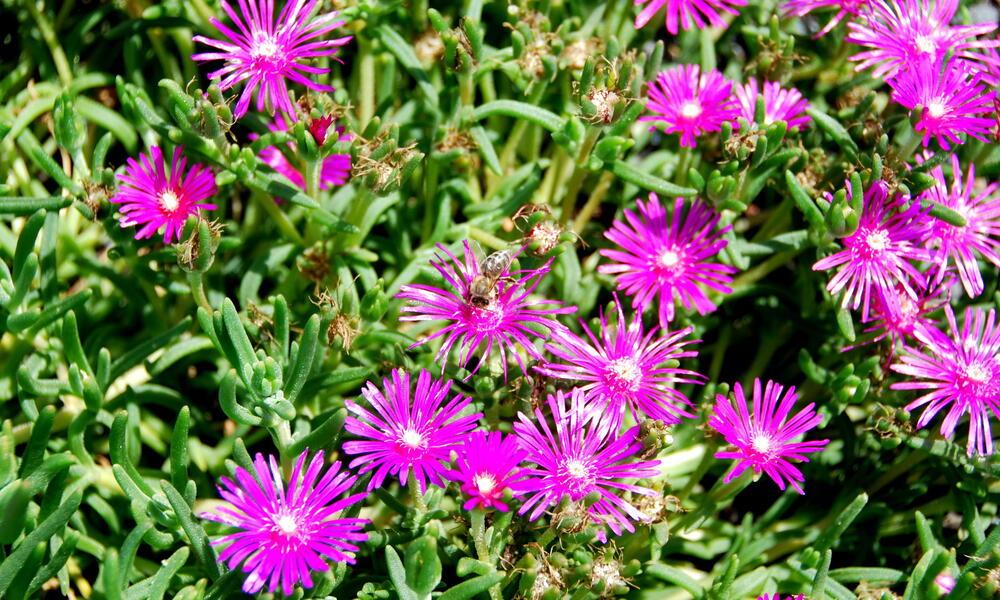 WWF Green HQ Photo Gallery Bee