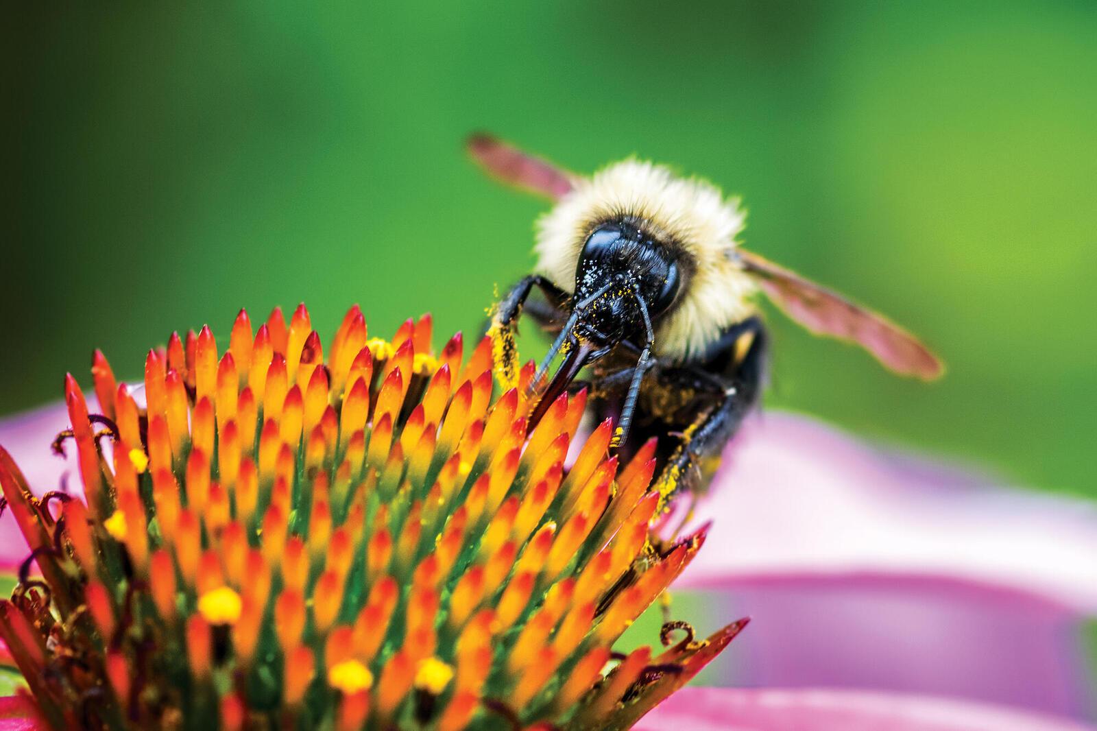Closeup of bee on flower