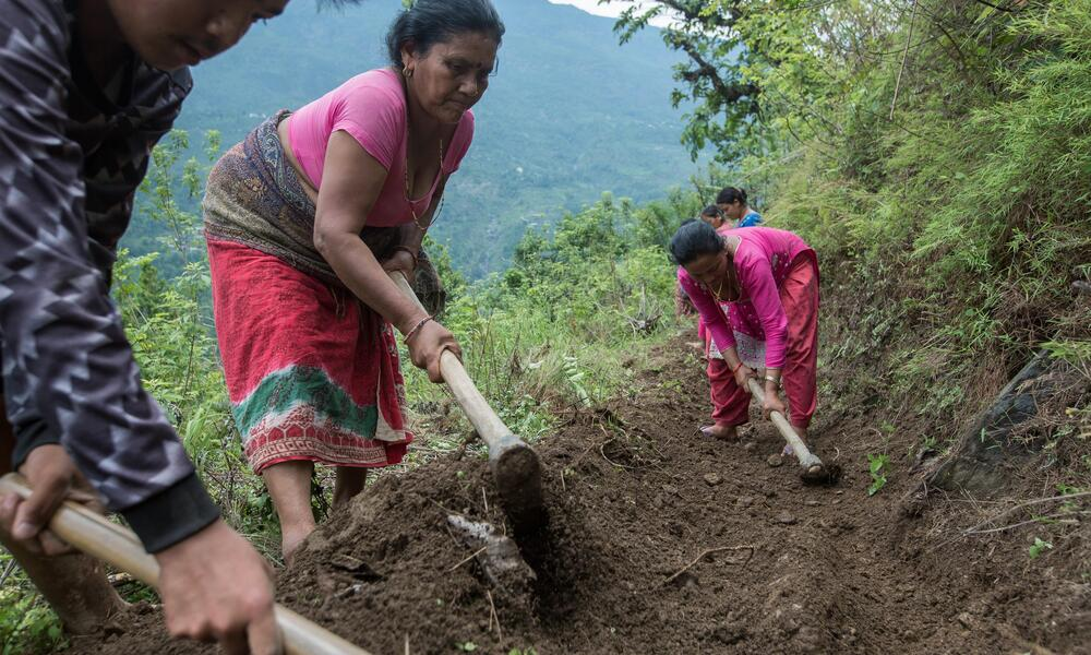 A group of people digging along a mountain slope