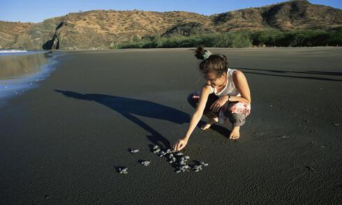 Biologist releases turtle hatchlings