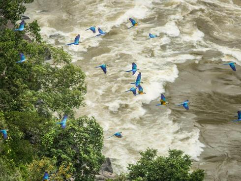 Birds over Chiribiquete