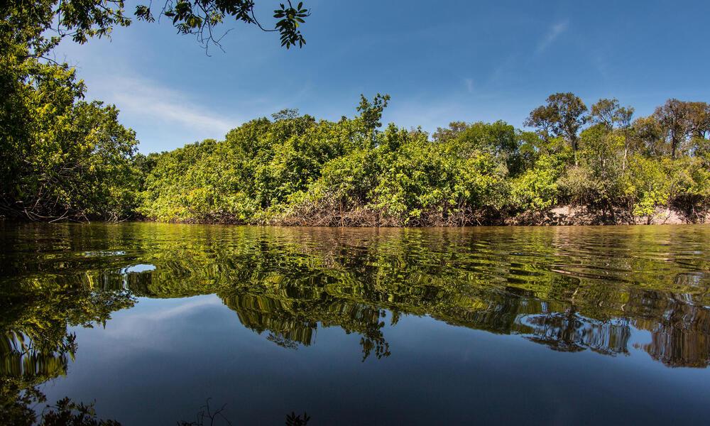 Bita River Jorge Garcia