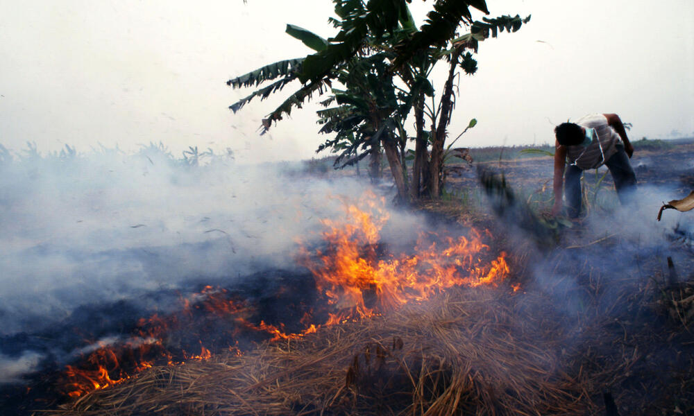 Bornean Orangutans are threatened by forest fires
