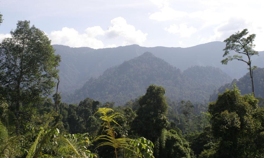 Borneo and Sumatra