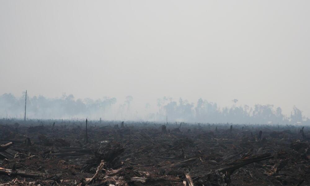 Borneo and Sumatra - Deforestation in Riau
