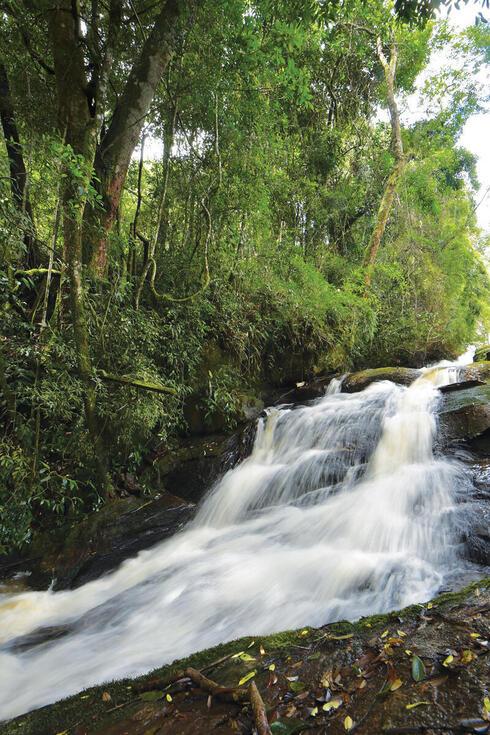 Waterfall in a green jungle