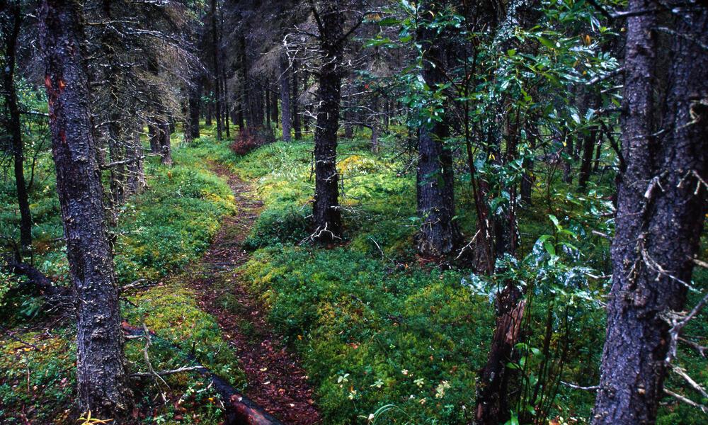 Brown bear habitat, Alaska