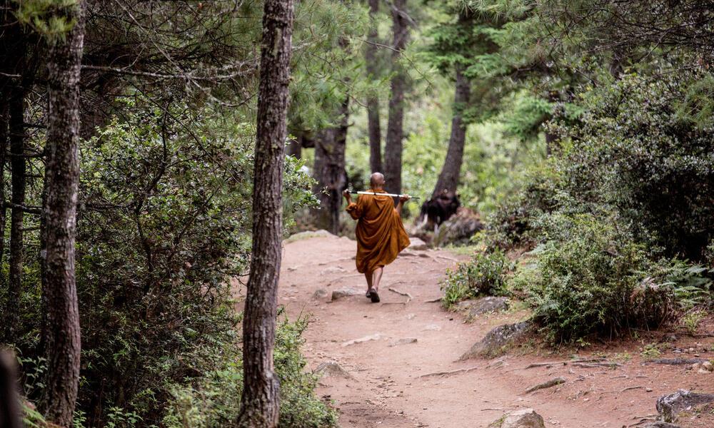 A Buddhist monk walking down a path.