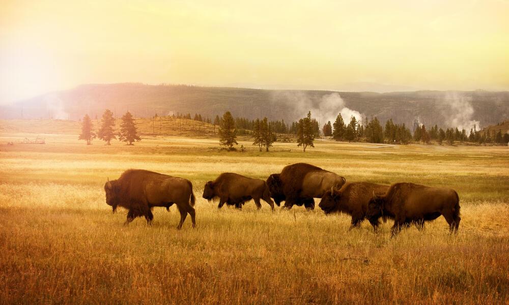 Buffalo Travel Page