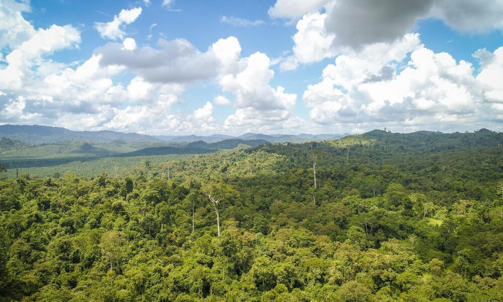 An aerial landscape view of a lush Bukit Piton forest