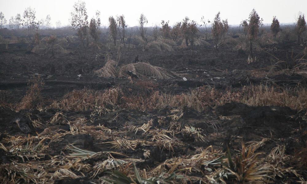 Burnt field, Trans-Sumatran Highway, Riau province, Sumatra Island, Indonesia.