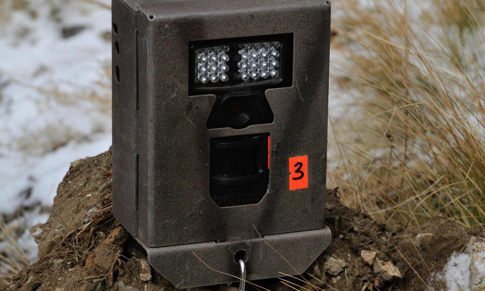 camera trap mongolia