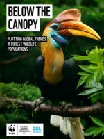 Below the Canopy Brochure