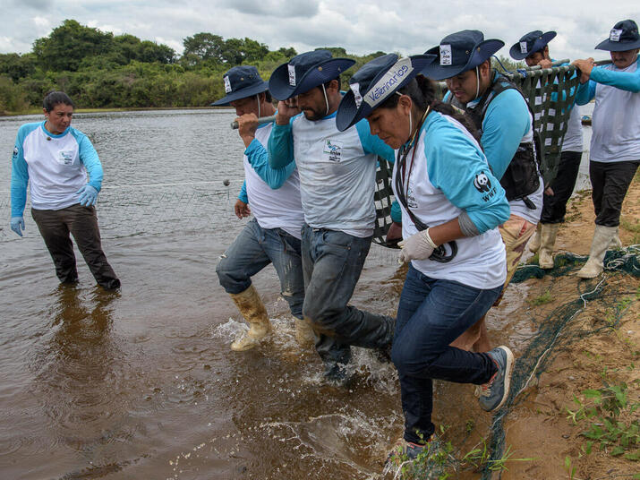 A team carries a river dolphin to shore