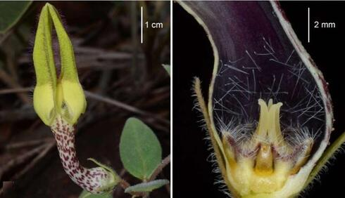 A plant that resembles the claw of an arcade toy machine.