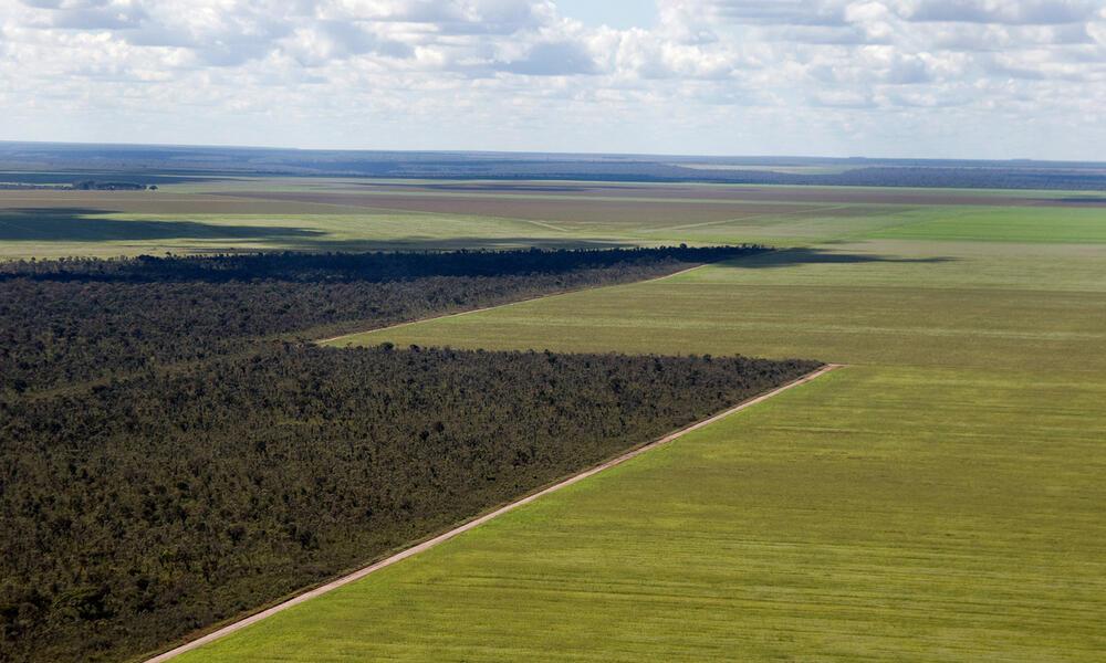 fields in the Cerrado