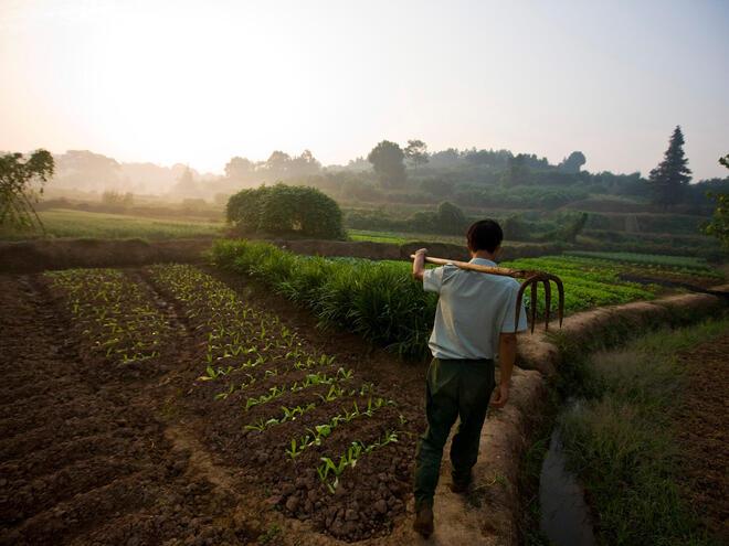 A Chinese farmer walking on his organic vegetable plot
