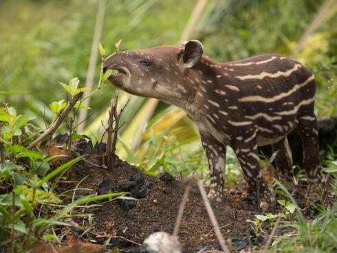 Chiribiquete Wildlife