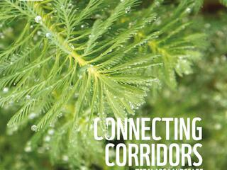 Connecting corridors in the Terai Arc landscape