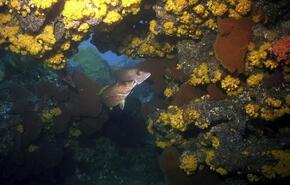 Coral reef at Marine Park