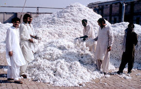 Cotton factory in Pakistan