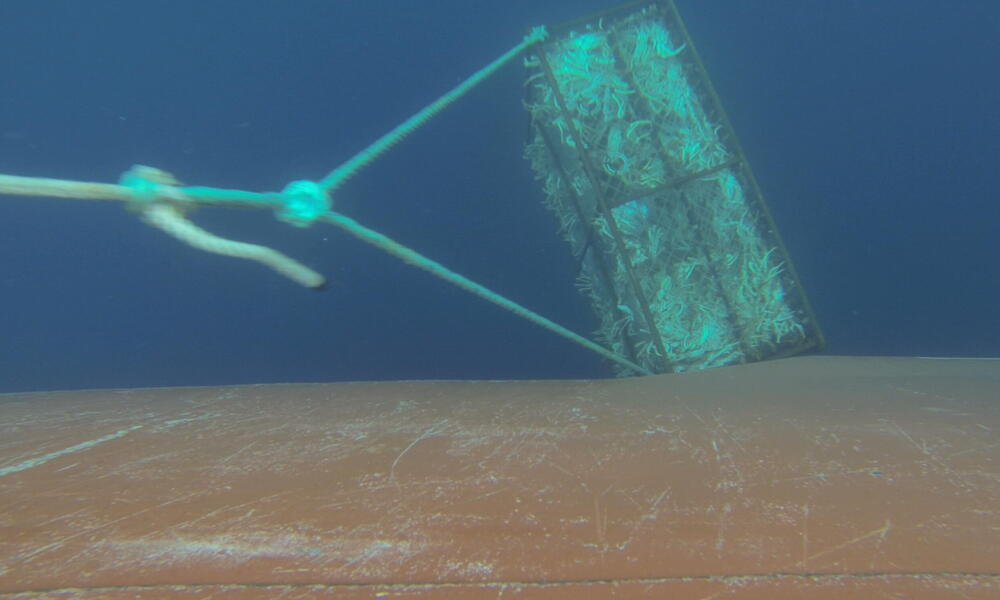 crab pot underwater