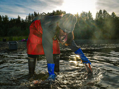 Allie Ivanoff washes cuts of pink salmon in a river to hang dry